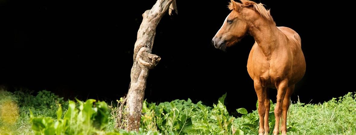 Urlaub Mit Pferd Freckmanns Landleben